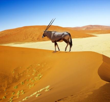 arrivee-en-namibie